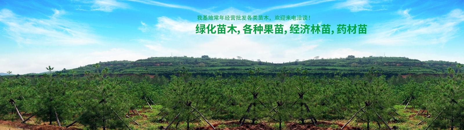 水果苗木批發